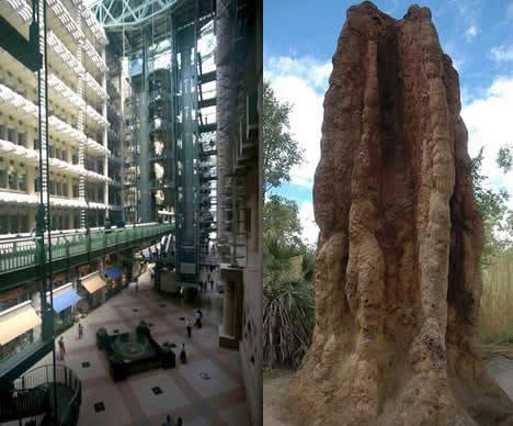 termite_mound