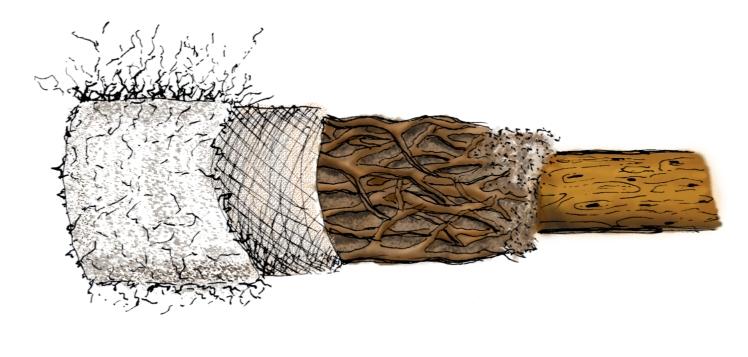 The Living Filtration System,  (winner) Biomimicry Global Design Challenge 2015